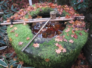 A zen pond